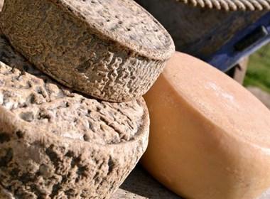 Pecorino-a-latte-crudo-della-Maremma