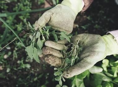 Giardinaggio e lavorazione manuale del terreno