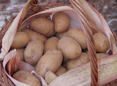 patata-del-mugello
