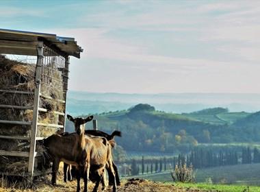 Fattoria-Le-Caprine-gambassi-terme