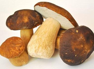 funghi-porcini