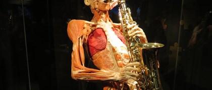 veri corpi umani.jpg
